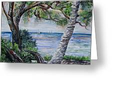 Window On Pine Island Greeting Card