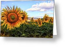 Window To The Sunflower Fields Oil Painting Greeting Card