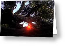 Window Tree Greeting Card
