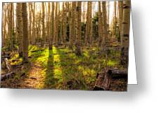 Windsor Trail At Dusk - Santa Fe National Forest New Mexico Greeting Card