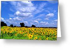 Windswept Field And Sky Greeting Card