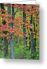Windy Day Autumn Colors Greeting Card