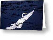 Windy Flight Greeting Card