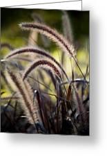 Windy Grass Greeting Card
