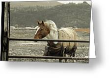 Windy In Mane Greeting Card