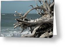 Windy Sea Greeting Card