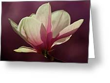 Wine And Cream Magnolia Blossom Greeting Card