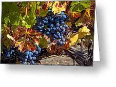 Wine Grapes Napa Valley Greeting Card