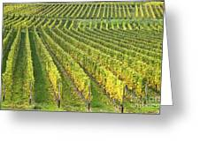Wine Growing Greeting Card