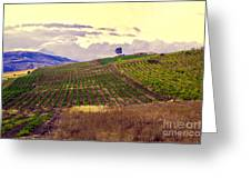 Wine Vineyard In Sicily Greeting Card