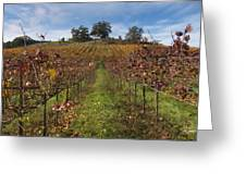 Wineland Greeting Card by Kenneth Hadlock