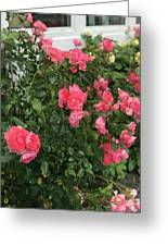 Winery Roses  Greeting Card