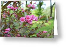 Wines And Rose Weigela Greeting Card