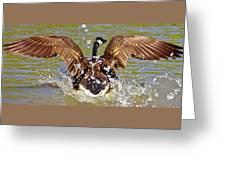 Wing Spand Greeting Card