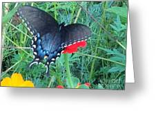 Wing Spread Butterfly Greeting Card