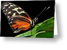 Wing Texture Of Eueides Isabella Longwing Butterfly On A Leaf Ag Greeting Card