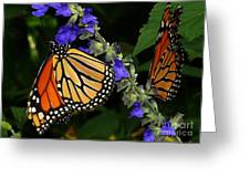 Winged Life Greeting Card