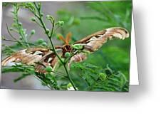 Wings 2 Greeting Card