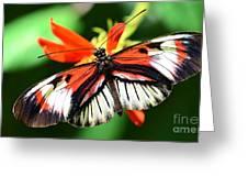 Wings 9 Greeting Card