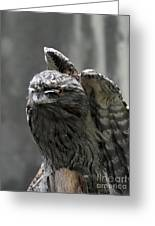 Wings Above A Tawny Frogmouth That Looks Interesting Greeting Card