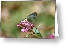Wings And Petals Greeting Card
