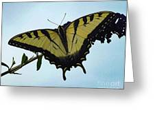 Wings Are Perfect Match - Eastern Tiger Swallowtail Greeting Card