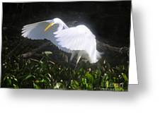 Wings Of An Angel Greeting Card