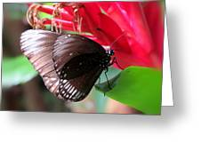 Wings Of Brown - Butterfly Greeting Card