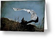 Wings Of Winter Greeting Card