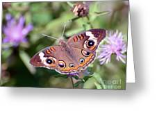 Wings Of Wonder - Common Buckeye Butterfly Greeting Card