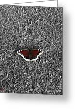 Wings On Grass Greeting Card