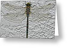Wings On Stucco Greeting Card