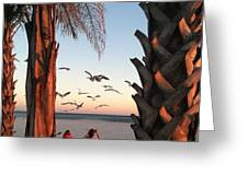 Wings Over The Palms Greeting Card