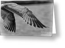 Wings Over Water Beach Pictures Black And White Seagull Greeting Card