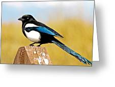 Winking Magpie Greeting Card