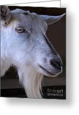 Winsome Goat Greeting Card