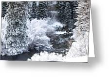 Winter Along The Creek Greeting Card