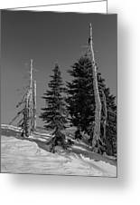 Winter Alpine Trees, Mount Rainier National Park, Washington, 2016 Greeting Card
