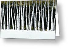 Winter Aspens II Greeting Card