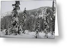 Winter Beauty Greeting Card