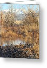 Winter Beaver Dam Charm Co     Greeting Card