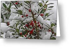Winter Berries In Watercolor Greeting Card
