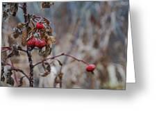 Winter Berries No.2 Greeting Card