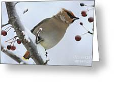 Winter Berry Treat Greeting Card