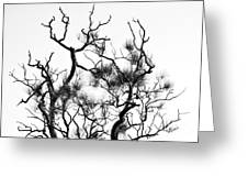 Winter... Black And White Greeting Card