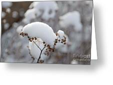 Winter Bloom Greeting Card