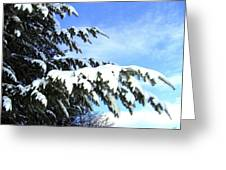 Winter Boughs Greeting Card