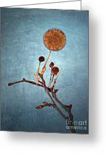 Winter Branch Greeting Card