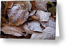 Winter Brown Leaves Powdered With Frost Greeting Card