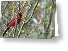 Winter Cardinal Sits On Tree Branch Greeting Card